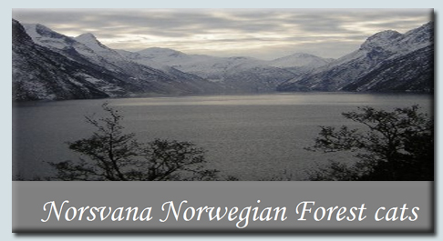 Norsvana Norwgian Forset Cats